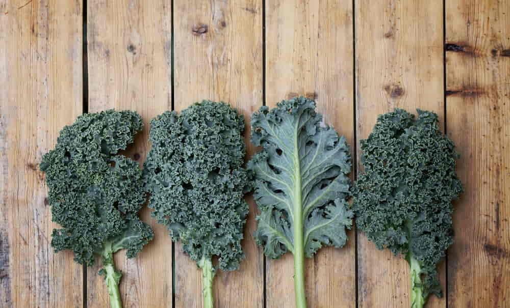 Kale super vegetable
