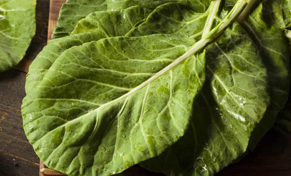 Raw Organic Green Collard Greens