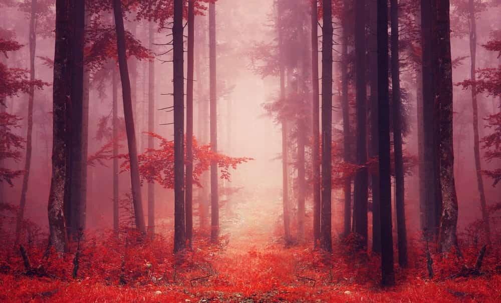 Fog Filters