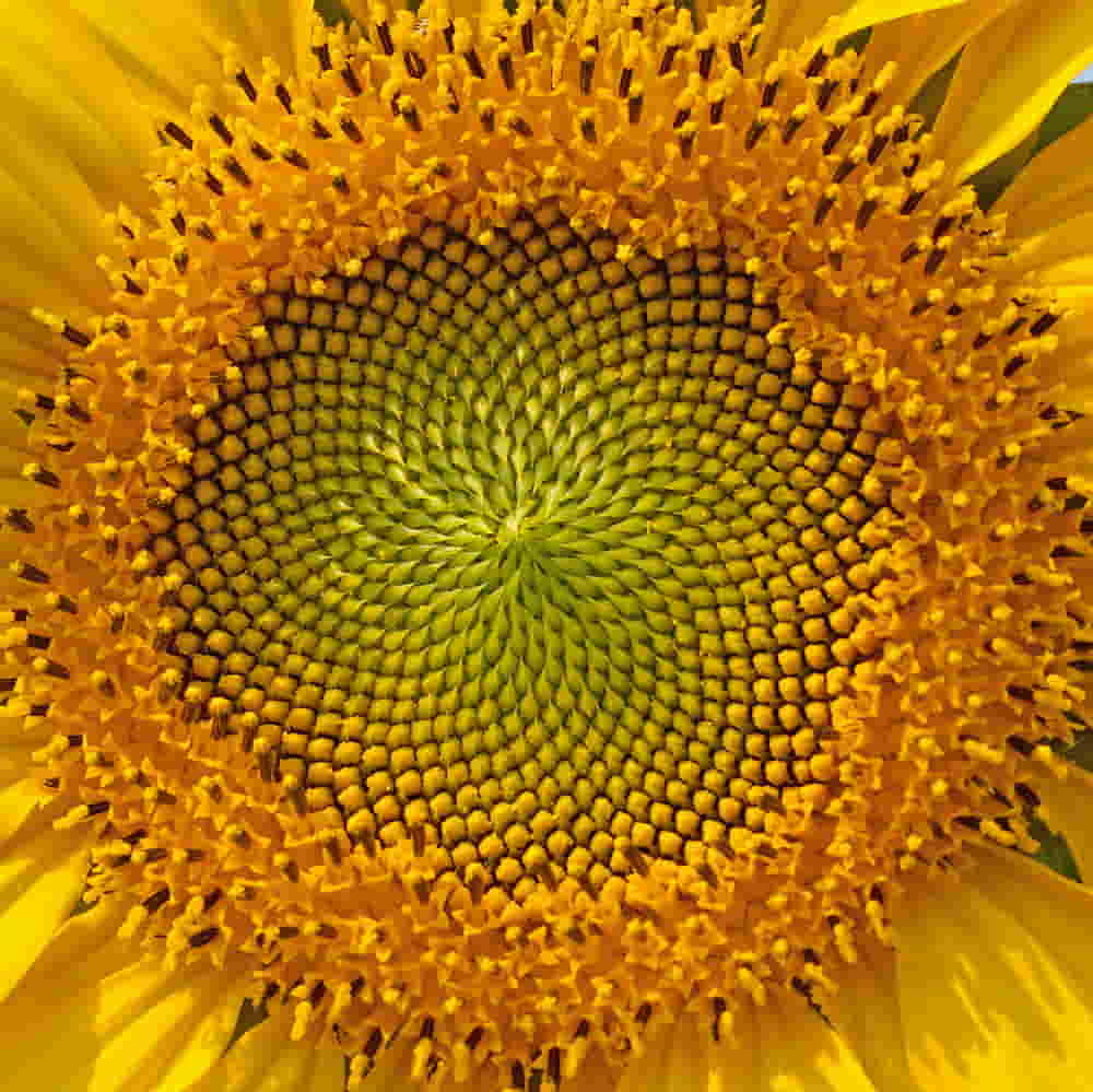 Golden Ratio Photography: How To Balance Your Composition Simply With The Fibonacci Sequence