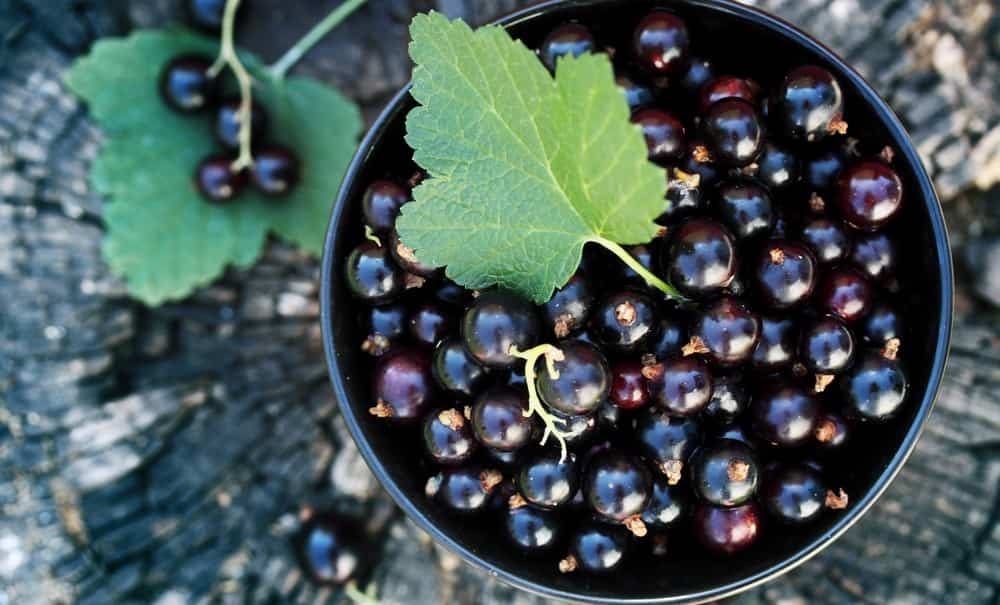 Black currants are loaded with vitamin C
