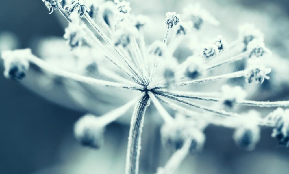 Macro Photography blog