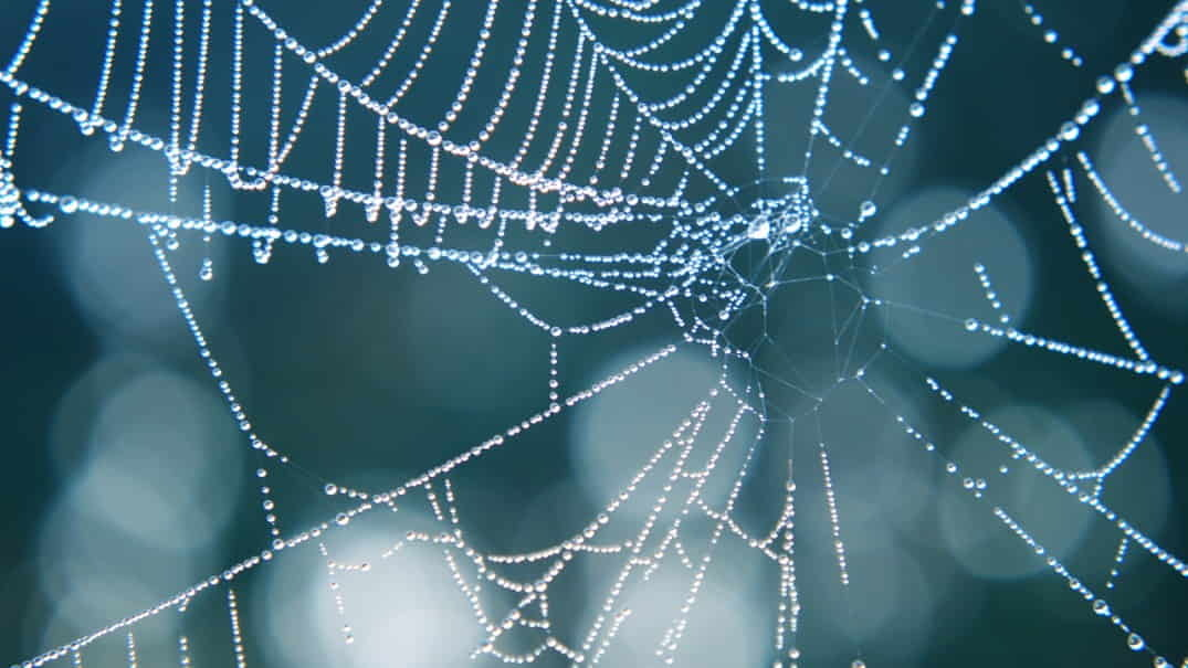 Spider webs make great macro subjects