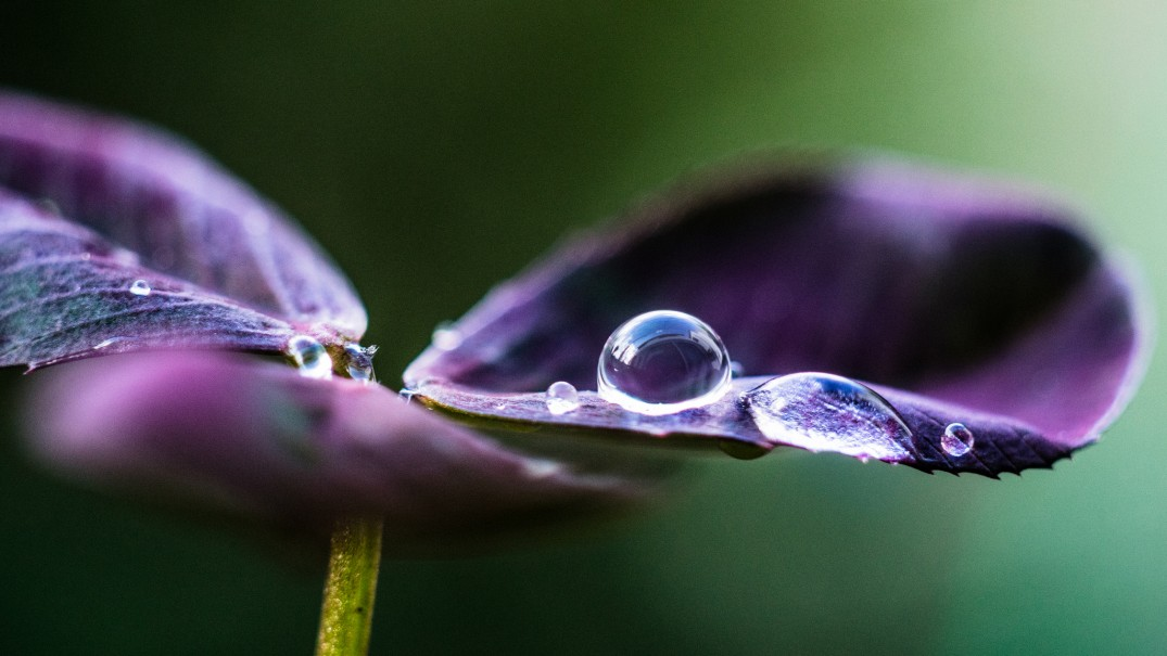 This shot isn't your typical macro flower image
