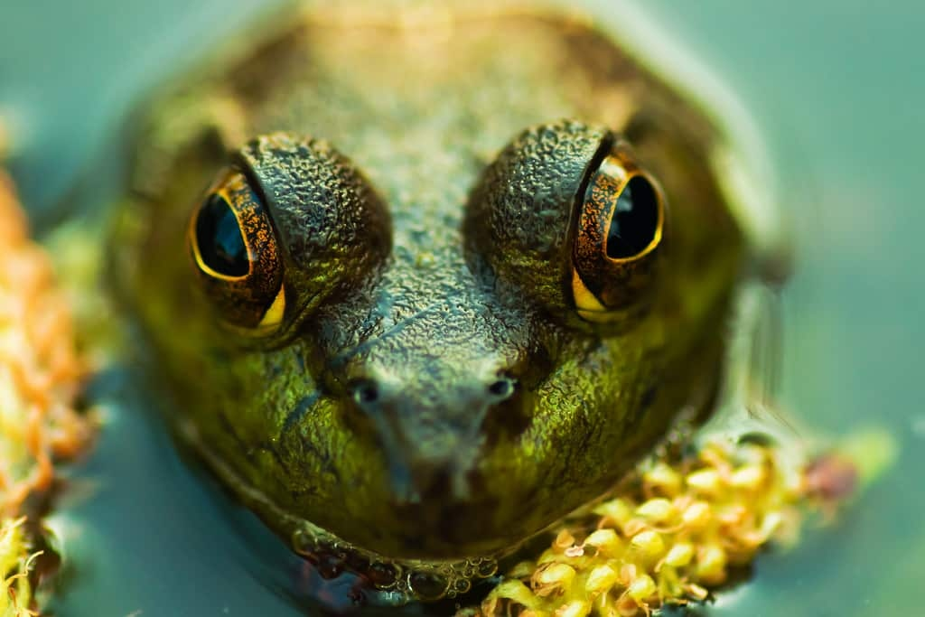 an intimate idea of the frog