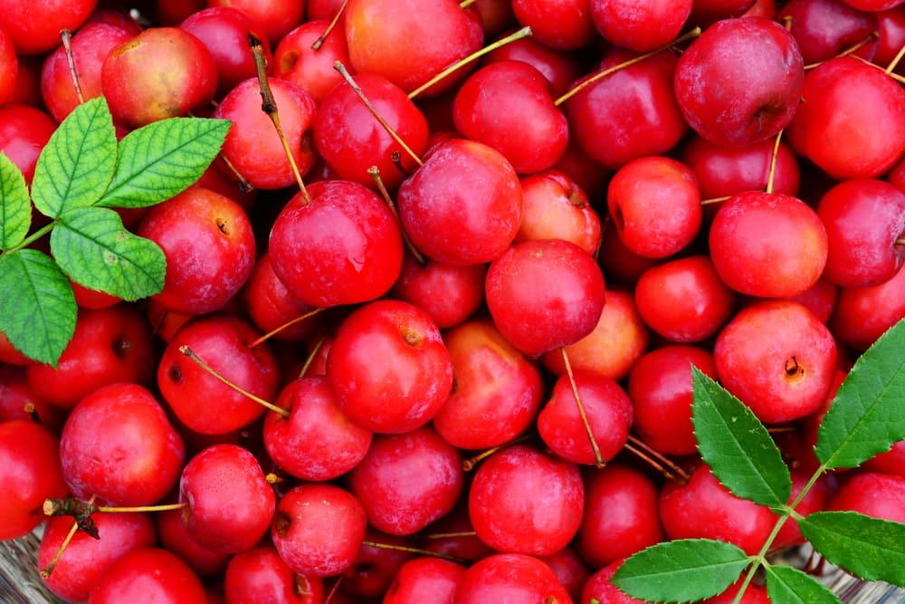 The World's Healthiest Fruit -APPLE